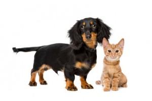 Pojištění domácích zvířat - psů a koček