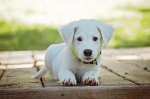 Na jaké výdaje by měli být připraveni majitelé psů?